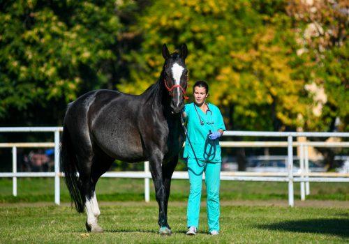 Promicanje i zastupanje interesa veterinarske struke
